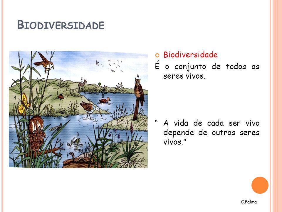 B IODIVERSIDADE Biodiversidade É o conjunto de todos os seres vivos. A vida de cada ser vivo depende de outros seres vivos. C.Palma