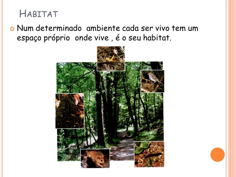 H ABITAT Num determinado ambiente cada ser vivo tem um espaço próprio onde vive, é o seu habitat.