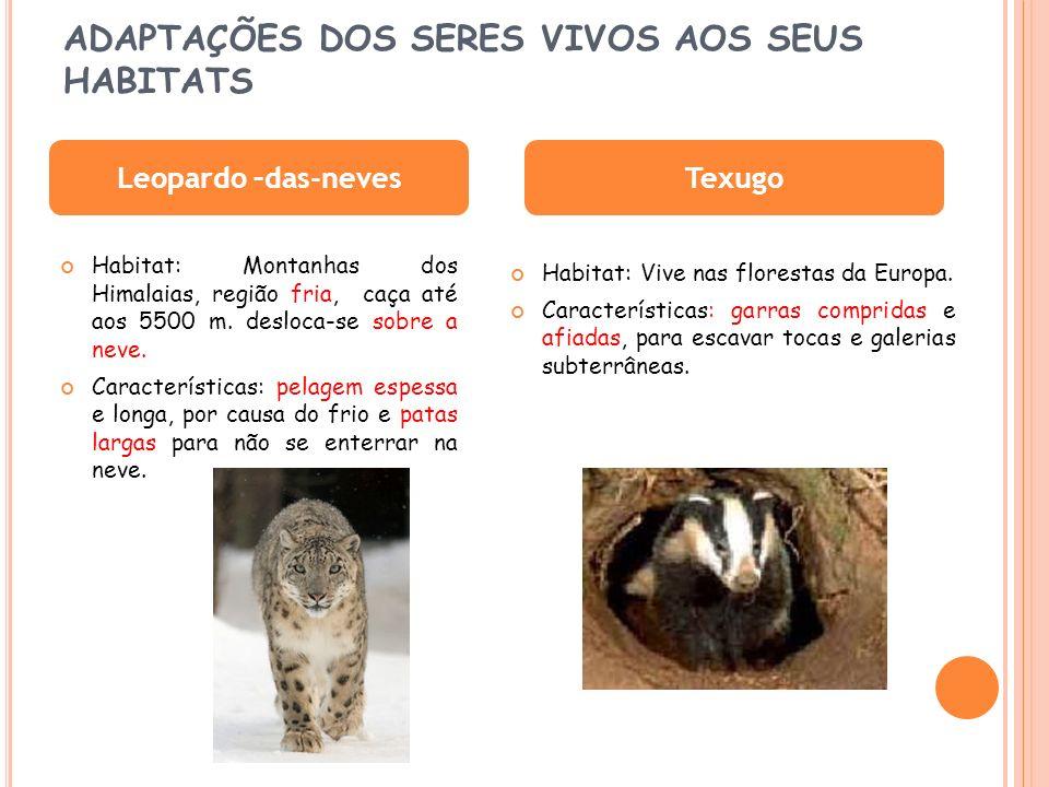 DESTRUIÇÃO DOS HABITATS DesflorestaçãoPoluição