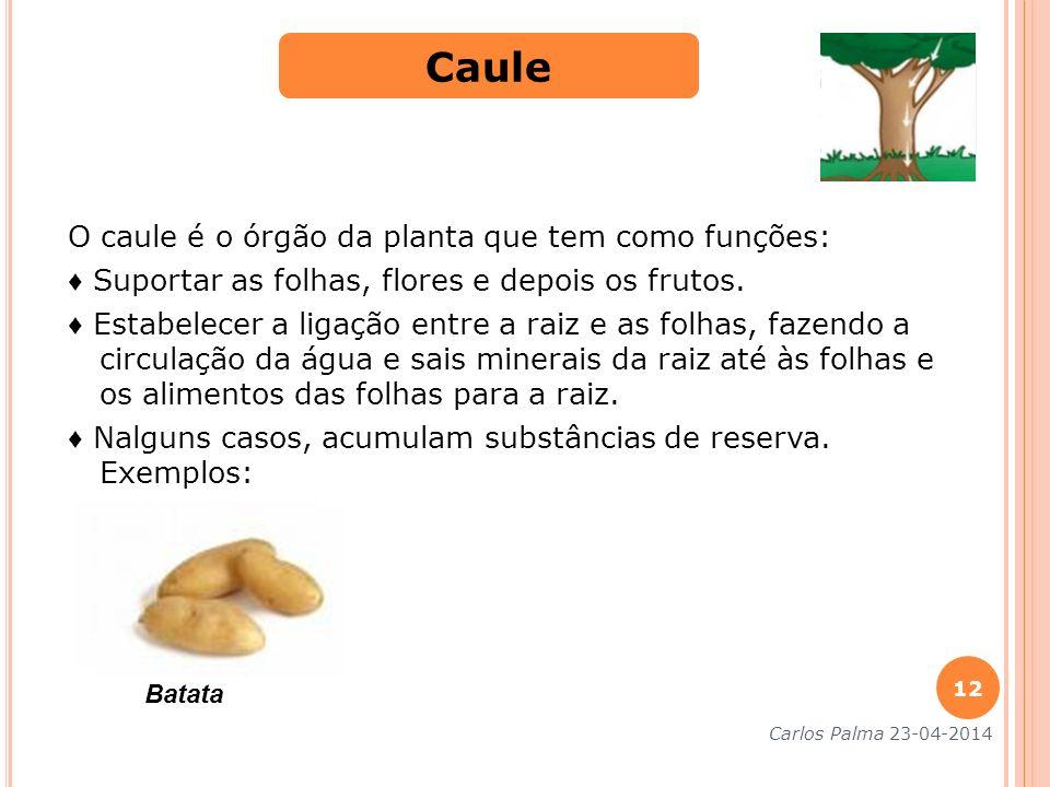 O caule é o órgão da planta que tem como funções: Suportar as folhas, flores e depois os frutos. Estabelecer a ligação entre a raiz e as folhas, fazen