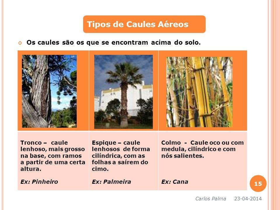 Os caules são os que se encontram acima do solo. Tipos de Caules Aéreos Tronco – caule lenhoso, mais grosso na base, com ramos a partir de uma certa a