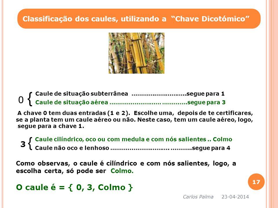 0 { Classificação dos caules, utilizando a Chave Dicotómico Caule de situação subterrânea ………………………..segue para 1 Caule de situação aérea ……………………… ……