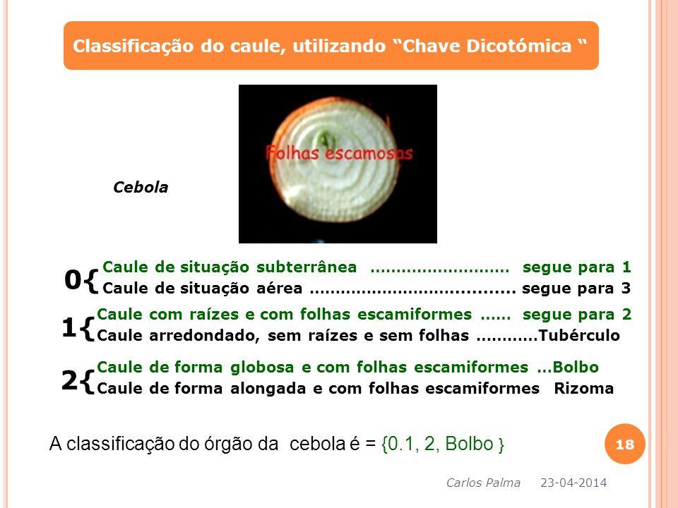 Classificação do caule, utilizando Chave Dicotómica Carlos Palma 23-04-2014 18 0{ Caule de situação subterrânea ……………………… segue para 1 Caule de situaç