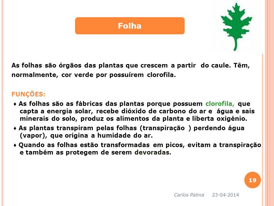 As folhas são órgãos das plantas que crescem a partir do caule. Têm, normalmente, cor verde por possuírem clorofila. FUNÇÕES: As folhas são as fábrica