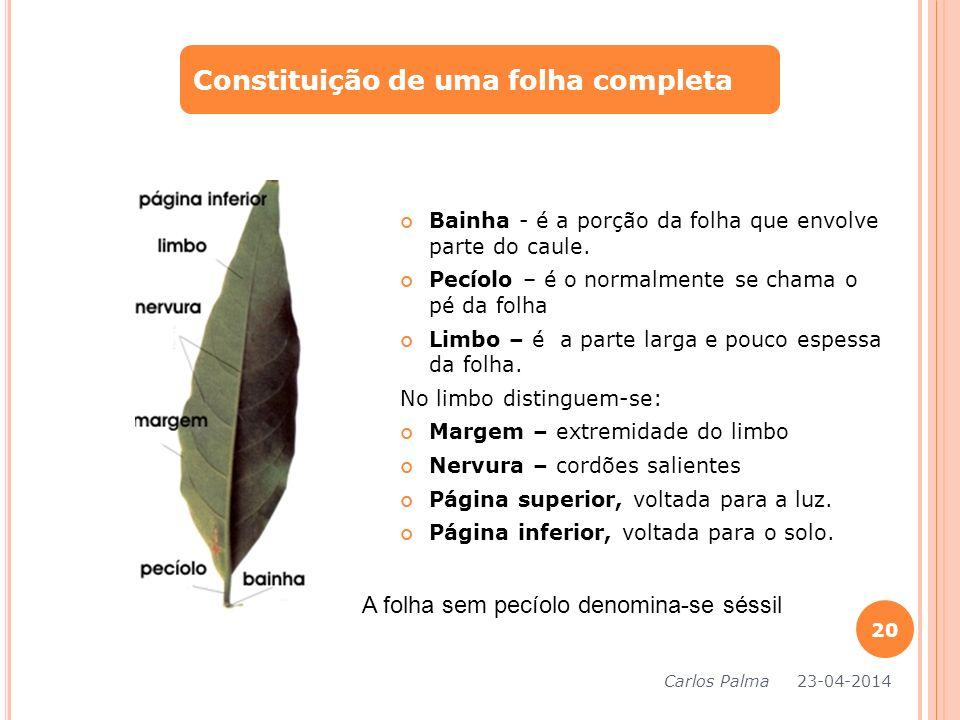 Bainha - é a porção da folha que envolve parte do caule. Pecíolo – é o normalmente se chama o pé da folha Limbo – é a parte larga e pouco espessa da f