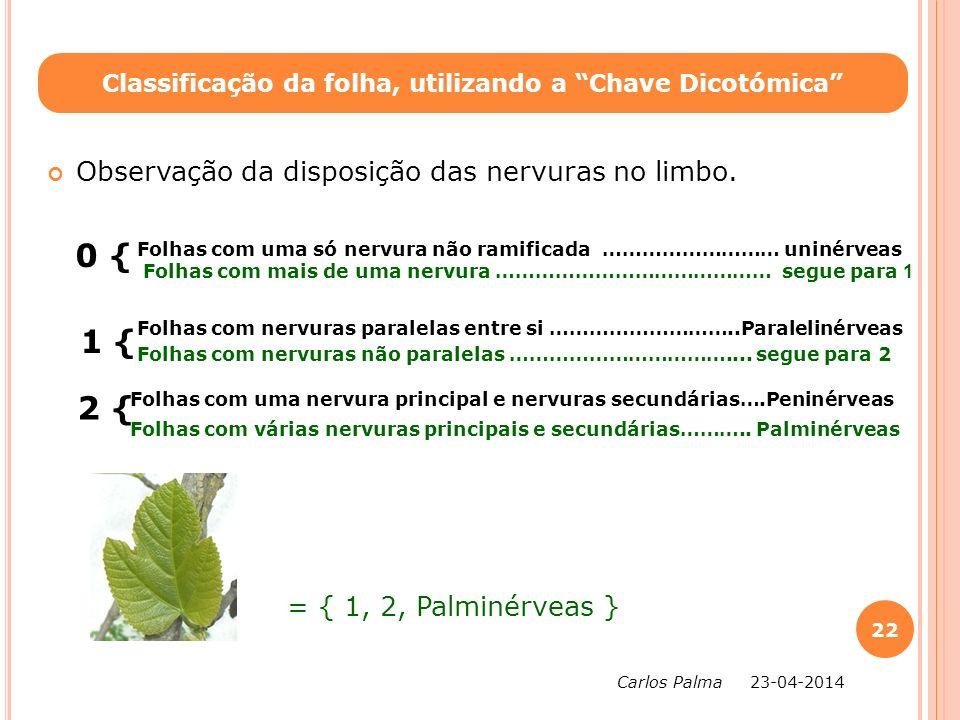 Observação da disposição das nervuras no limbo. 0 { 1 { Classificação da folha, utilizando a Chave Dicotómica Folhas com uma só nervura não ramificada