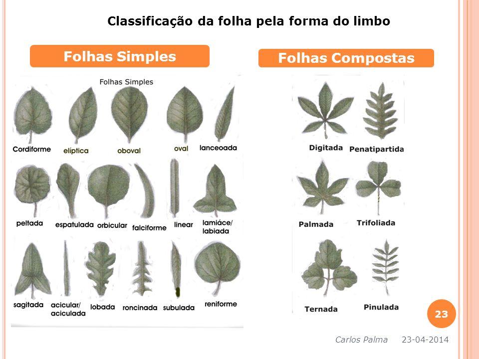 Folhas Simples Folhas Compostas Classificação da folha pela forma do limbo Carlos Palma 23-04-2014 23