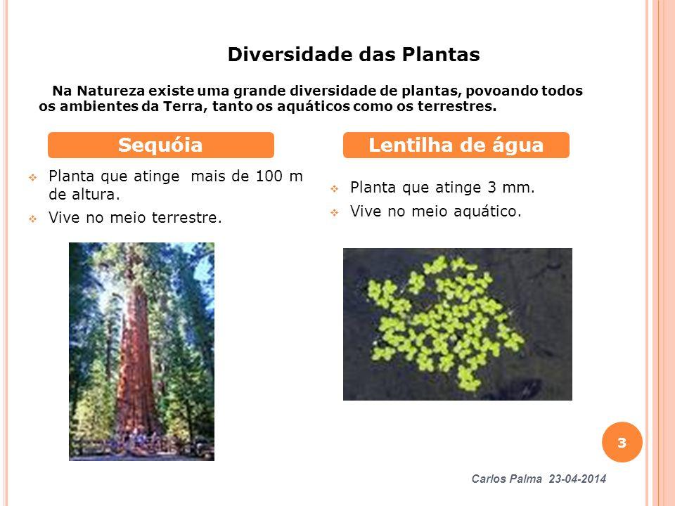 Planta que atinge mais de 100 m de altura. Vive no meio terrestre. Planta que atinge 3 mm. Vive no meio aquático. SequóiaLentilha de água Diversidade