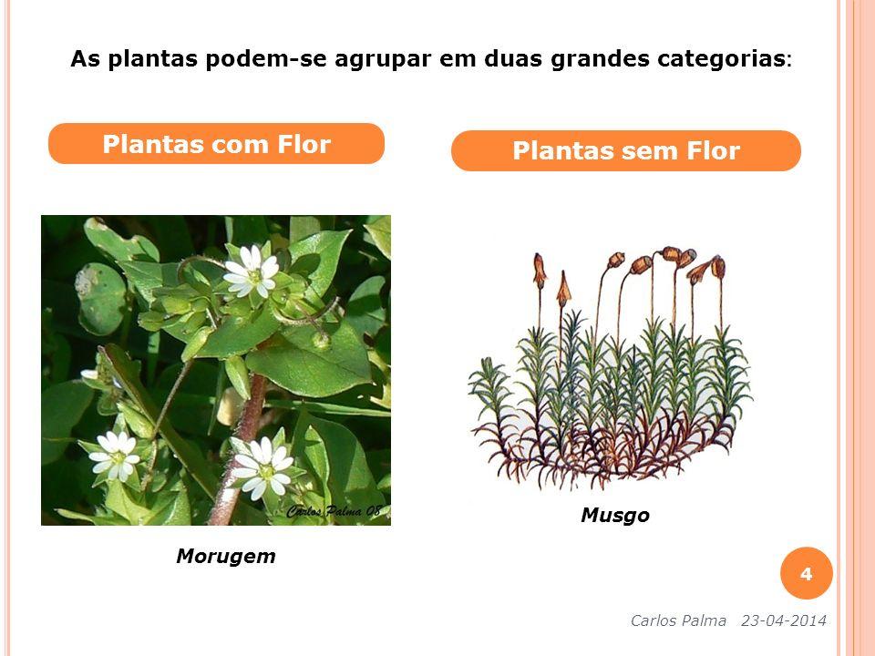 Plantas com Flor Plantas sem Flor Morugem Musgo Carlos Palma 23-04-2014 4 As plantas podem-se agrupar em duas grandes categorias :