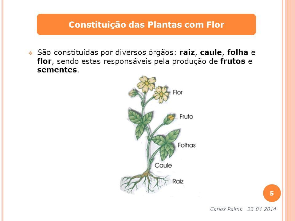 São constituídas por diversos órgãos: raiz, caule, folha e flor, sendo estas responsáveis pela produção de frutos e sementes. Constituição das Plantas
