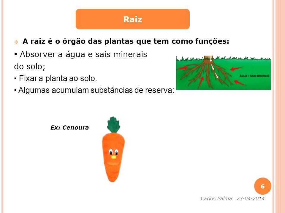 A raiz é o órgão das plantas que tem como funções: Absorver a água e sais minerais do solo; Fixar a planta ao solo. Algumas acumulam substâncias de re
