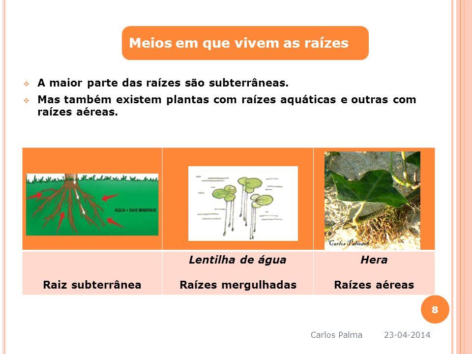 A maior parte das raízes são subterrâneas. Mas também existem plantas com raízes aquáticas e outras com raízes aéreas. Meios em que vivem as raízes Ra
