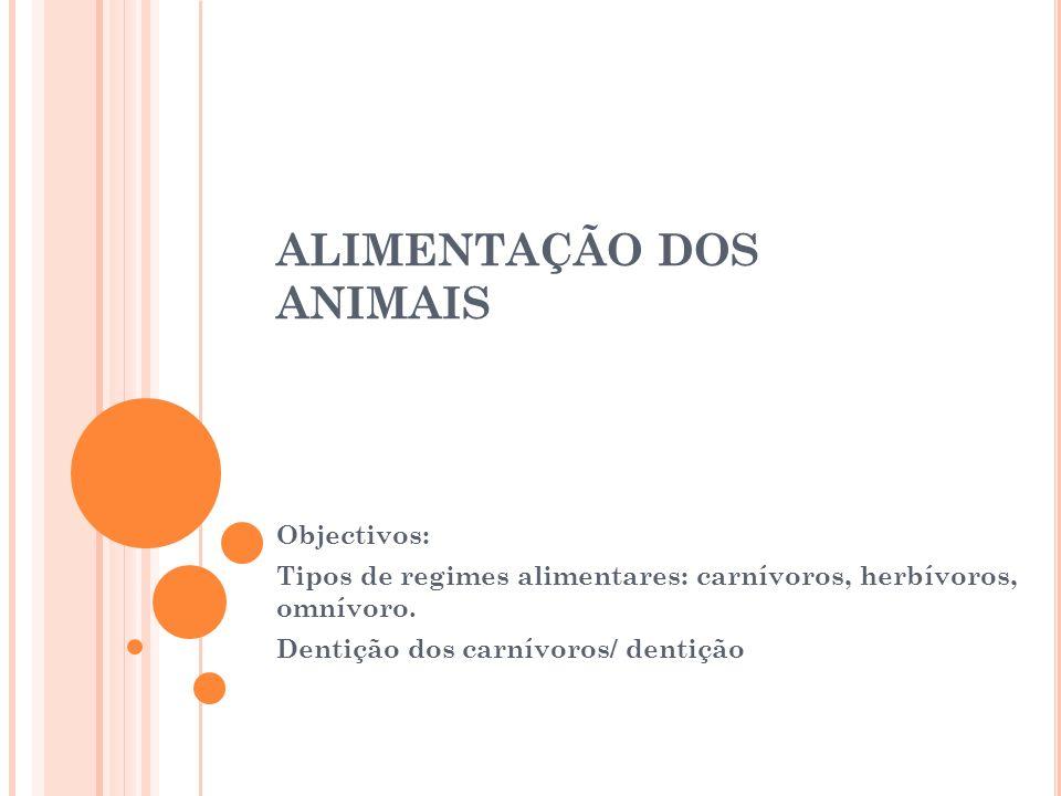 ALIMENTAÇÃO DOS ANIMAIS Objectivos: Tipos de regimes alimentares: carnívoros, herbívoros, omnívoro. Dentição dos carnívoros/ dentição