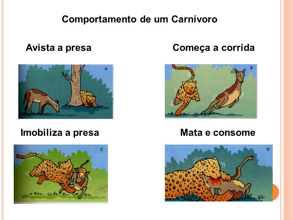 Comportamento de um Carnívoro Avista a presa Começa a corrida Imobiliza a presa Mata e consome