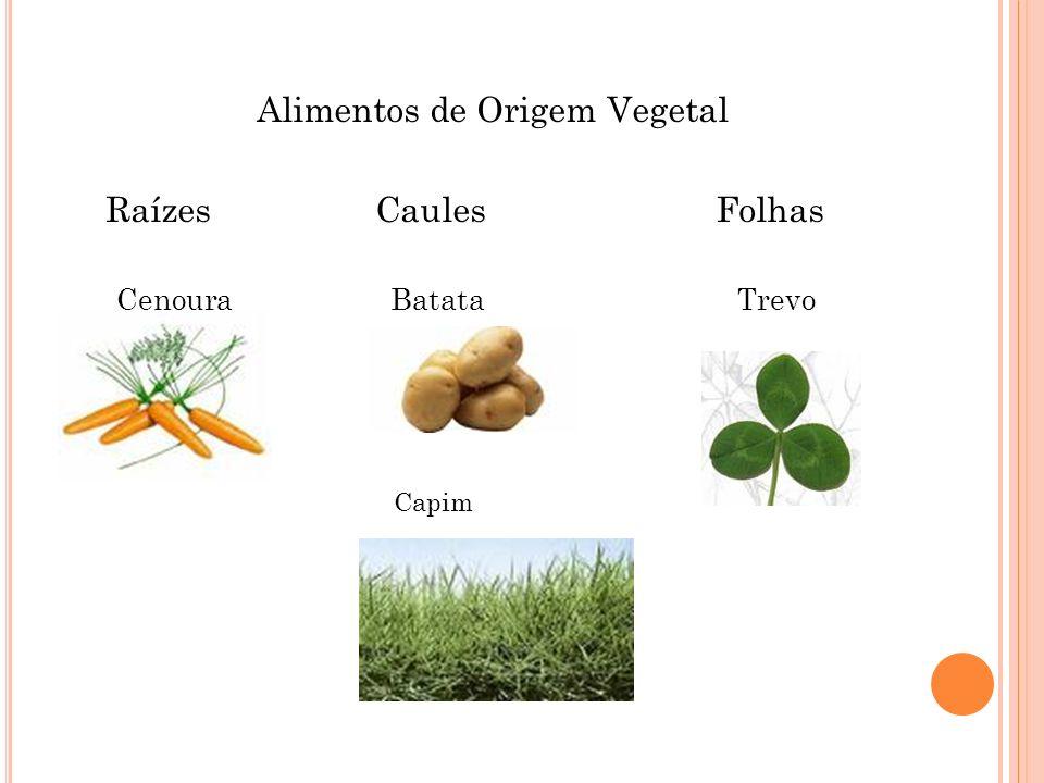 Alimentos de Origem Vegetal Raízes Caules Folhas Cenoura Batata Trevo Capim