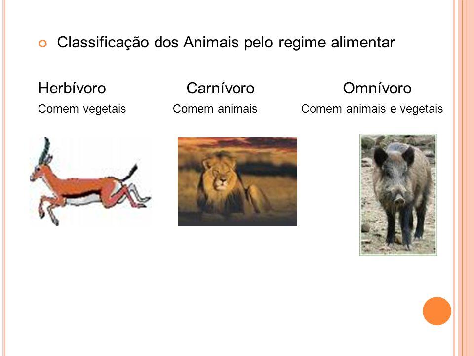 Classificação dos Animais pelo regime alimentar Herbívoro Carnívoro Omnívoro Comem vegetais Comem animais Comem animais e vegetais