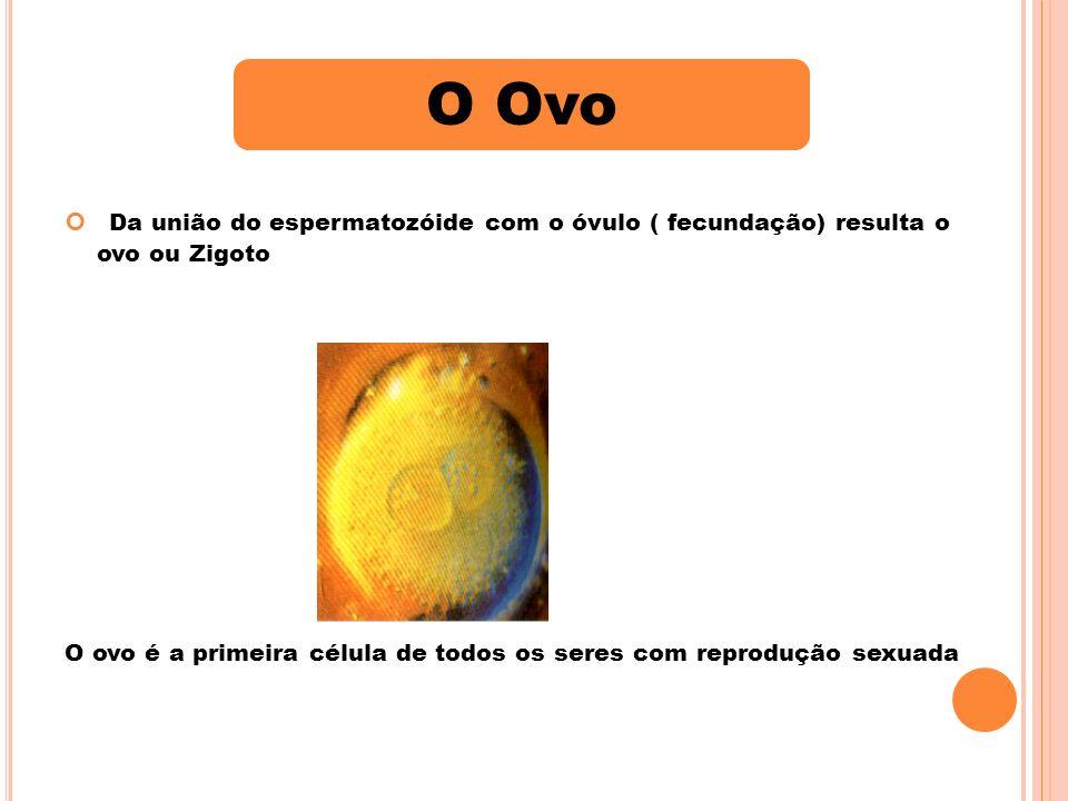VivíparosOvíparosOvovivíparos Nascimento de víboras O ovo é pequeníssimo pobre em substâncias nutritivas.