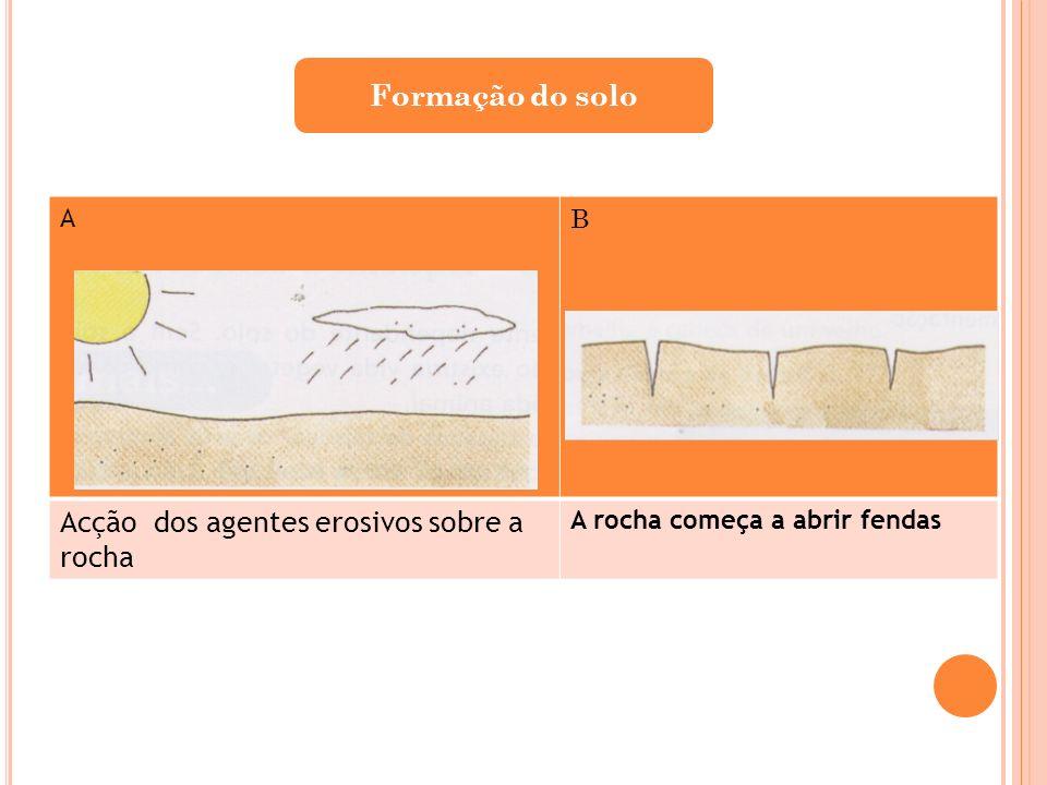 A B Acção dos agentes erosivos sobre a rocha A rocha começa a abrir fendas Formação do solo
