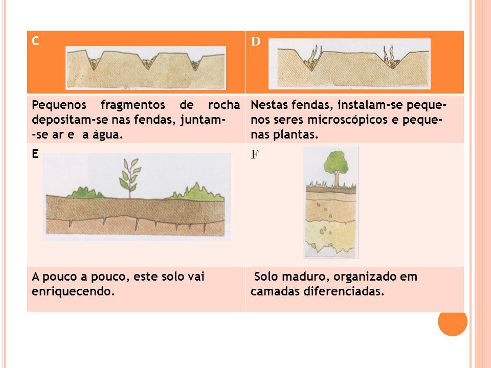 C D Pequenos fragmentos de rocha depositam-se nas fendas, juntam- -se ar e a água. Nestas fendas, instalam-se peque- nos seres microscópicos e peque-