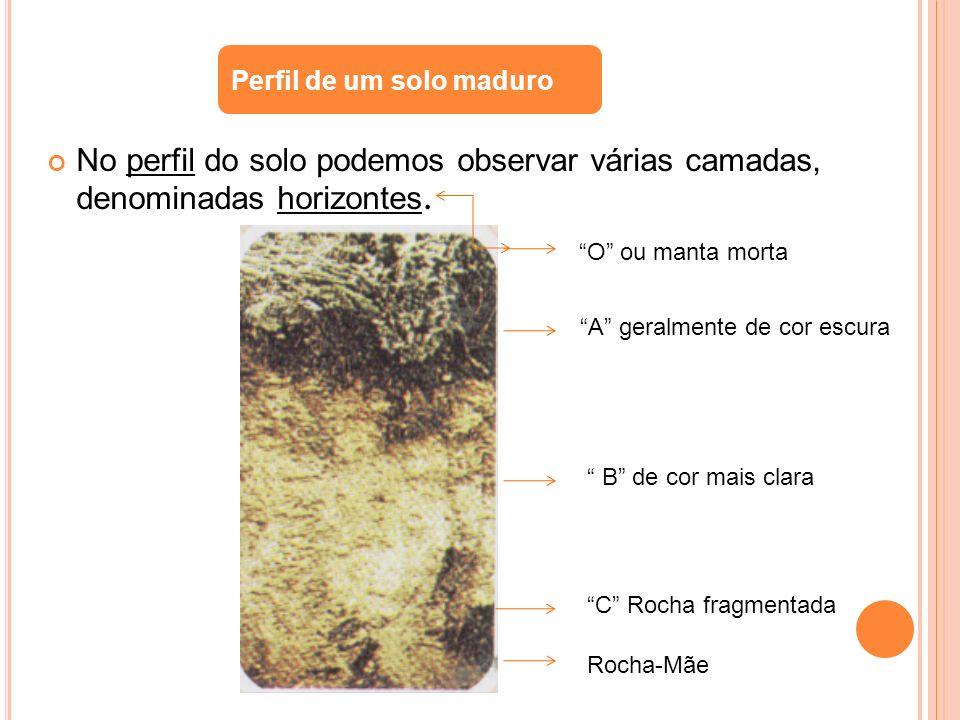 No perfil do solo podemos observar várias camadas, denominadas horizontes. Perfil de um solo maduro O ou manta morta A geralmente de cor escura B de c