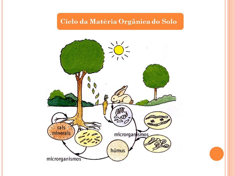 Ciclo da Matéria Orgânica do Solo
