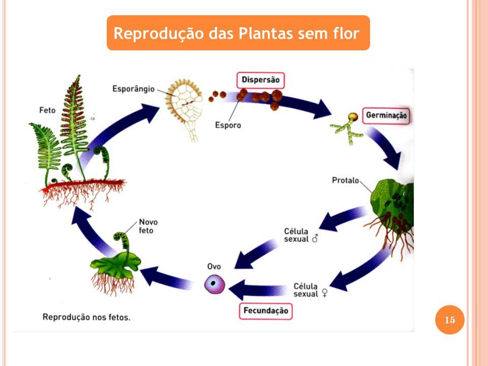 Reprodução das Plantas sem flor 15