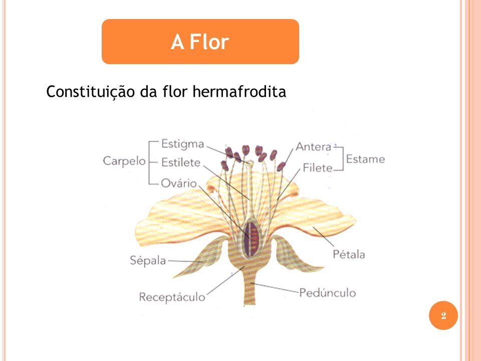 Germinação da Semente 1.Aparecimento da raiz 2.Aparecimento do caule curvado para não danificar os cotilédones 3.Finalmente aparecem as primeiras folhas 13