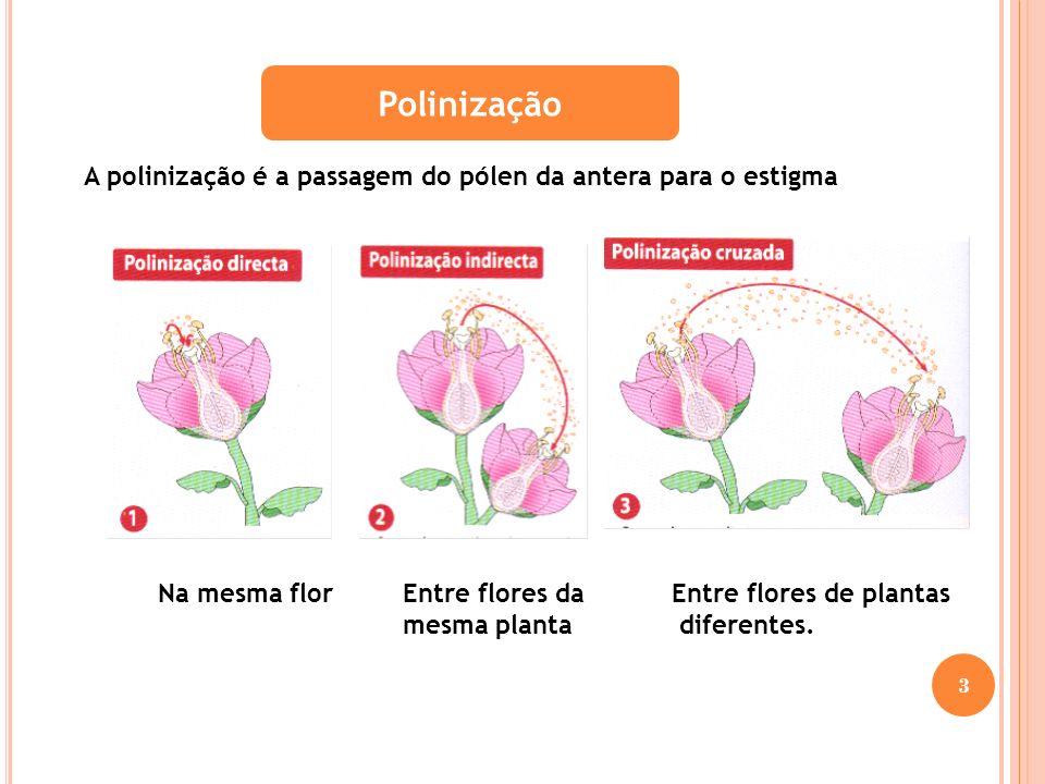 Fases da Função Reprodutora nas plantas com flor 14 Polinização A polinização é a passagem do pólen da antera para o estigma Fecundação Fecundação é a união da célula sexual masculina, contida na extremidade do tubo polínico, com a célula sexual feminina contida no óvulo.