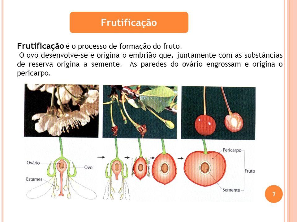 Frutificação Frutificação é o processo de formação do fruto. O ovo desenvolve–se e origina o embrião que, juntamente com as substâncias de reserva ori