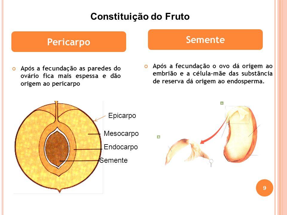 Após a fecundação as paredes do ovário fica mais espessa e dão origem ao pericarpo Após a fecundação o ovo dá origem ao embrião e a célula-mãe das sub