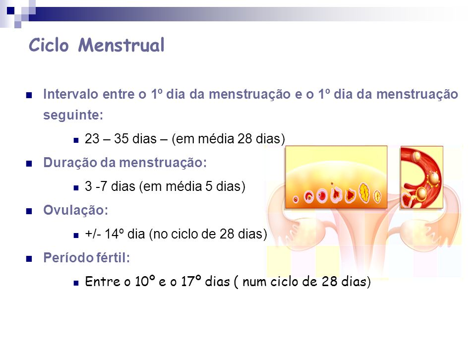 Ciclo Menstrual Intervalo entre o 1º dia da menstruação e o 1º dia da menstruação seguinte: 23 – 35 dias – (em média 28 dias) Duração da menstruação: