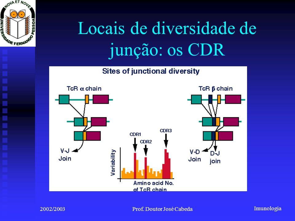 Imunologia 2002/2003Prof. Doutor José Cabeda Locais de diversidade de junção: os CDR