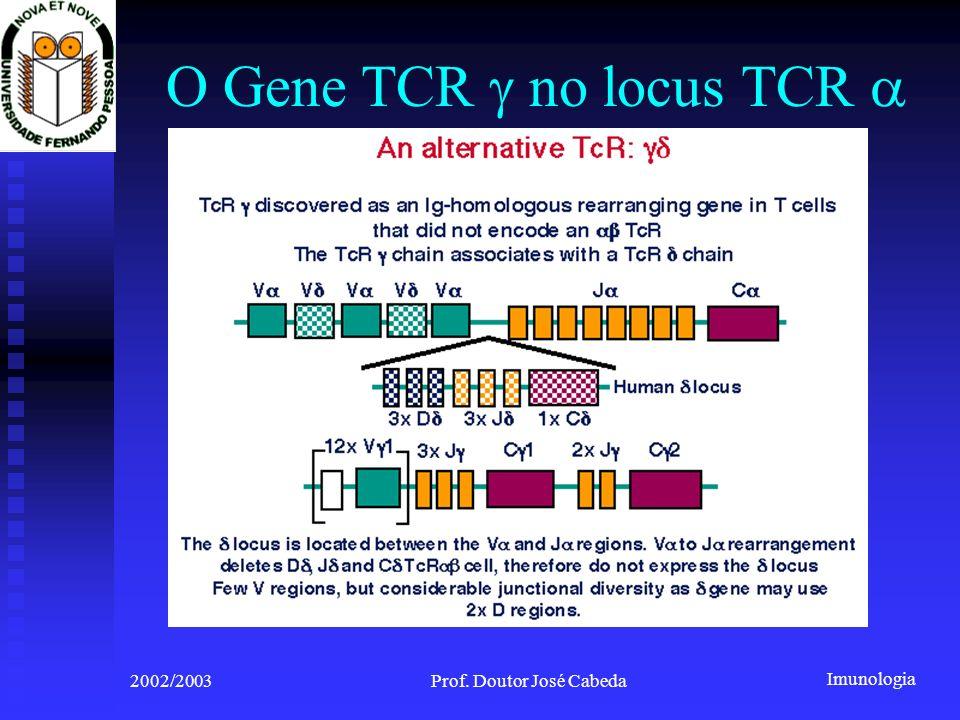Imunologia 2002/2003Prof. Doutor José Cabeda O Gene TCR no locus TCR