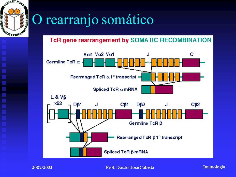 Imunologia 2002/2003Prof. Doutor José Cabeda O rearranjo somático