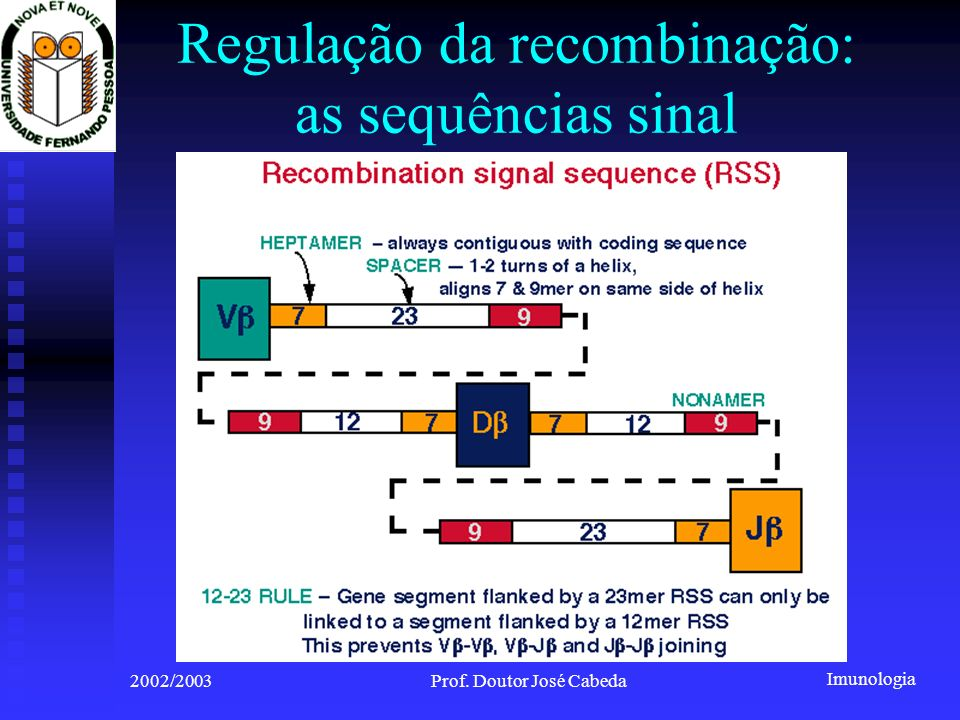 Imunologia 2002/2003Prof. Doutor José Cabeda Regulação da recombinação: as sequências sinal