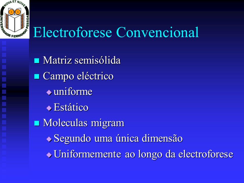 Electroforese Convencional Matriz semisólida Matriz semisólida Campo eléctrico Campo eléctrico uniforme uniforme Estático Estático Moleculas migram Mo