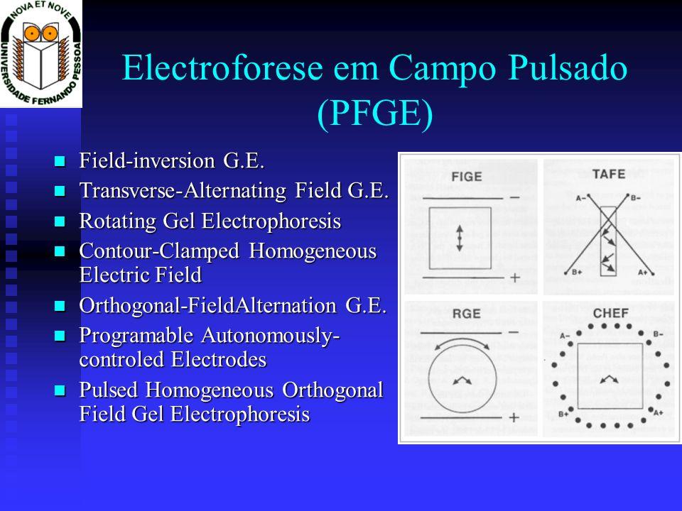 Electroforese em Campo Pulsado (PFGE) Field-inversion G.E. Field-inversion G.E. Transverse-Alternating Field G.E. Transverse-Alternating Field G.E. Ro