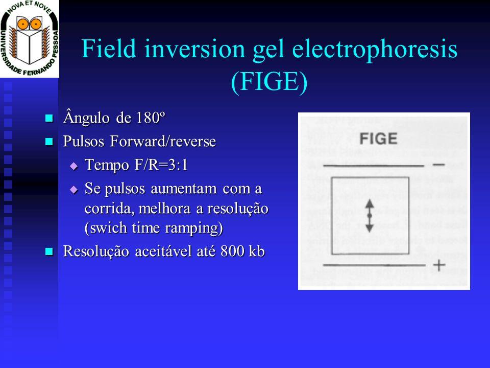 Field inversion gel electrophoresis (FIGE) Ângulo de 180º Ângulo de 180º Pulsos Forward/reverse Pulsos Forward/reverse Tempo F/R=3:1 Tempo F/R=3:1 Se