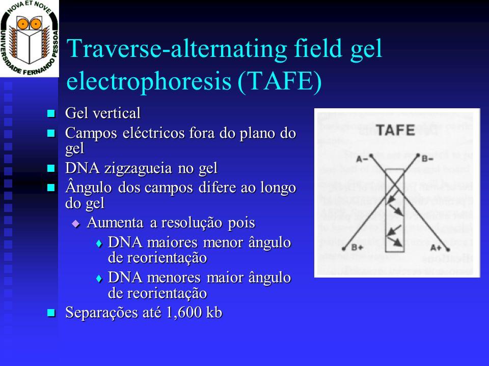 Traverse-alternating field gel electrophoresis (TAFE) Gel vertical Gel vertical Campos eléctricos fora do plano do gel Campos eléctricos fora do plano