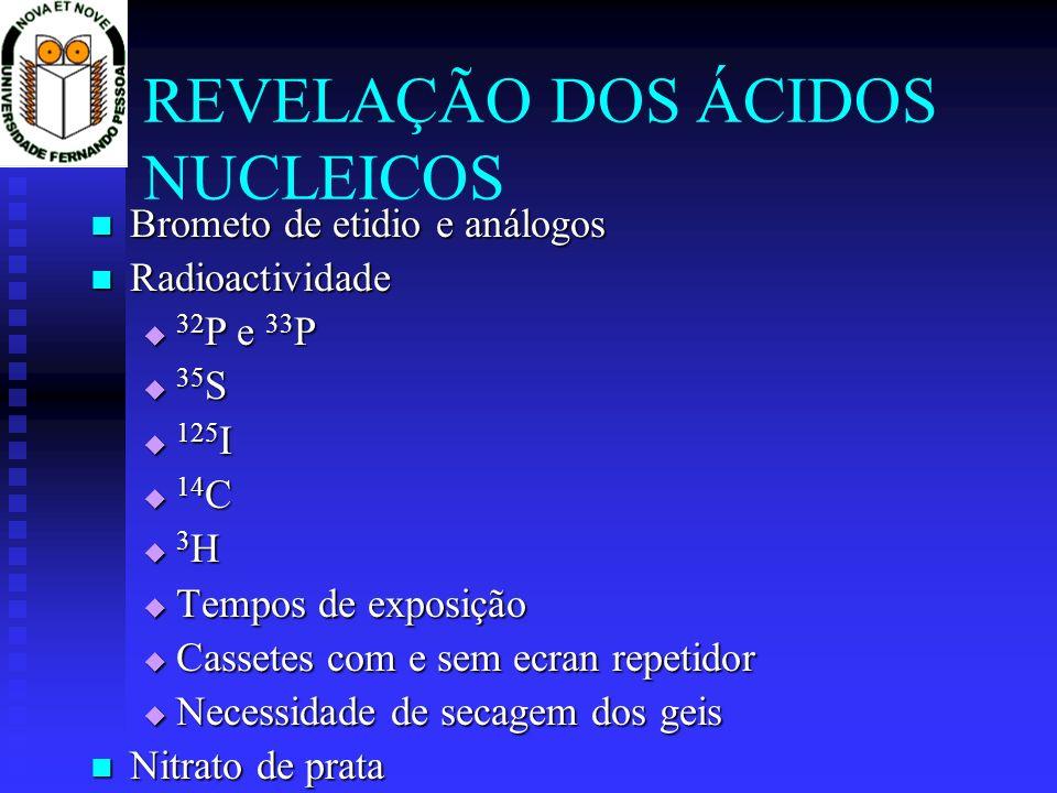 REVELAÇÃO DOS ÁCIDOS NUCLEICOS Brometo de etidio e análogos Brometo de etidio e análogos Radioactividade Radioactividade 32 P e 33 P 32 P e 33 P 35 S