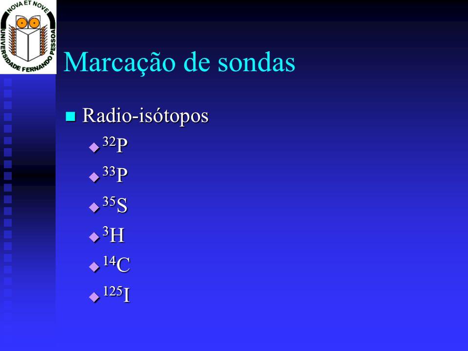 Marcação de sondas Radio-isótopos Radio-isótopos 32 P 32 P 33 P 33 P 35 S 35 S 3 H 3 H 14 C 14 C 125 I 125 I