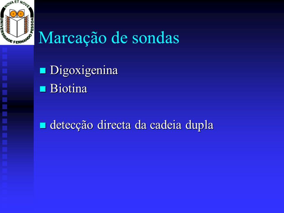 Digoxigenina Digoxigenina Biotina Biotina detecção directa da cadeia dupla detecção directa da cadeia dupla Marcação de sondas