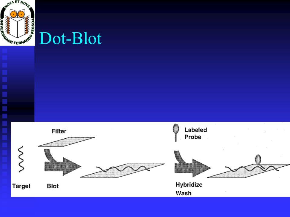 Dot-Blot