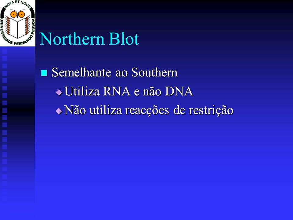 Northern Blot Semelhante ao Southern Semelhante ao Southern Utiliza RNA e não DNA Utiliza RNA e não DNA Não utiliza reacções de restrição Não utiliza