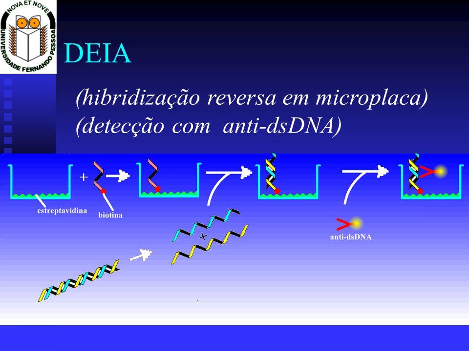 DEIA (hibridização reversa em microplaca) (detecção com anti-dsDNA)