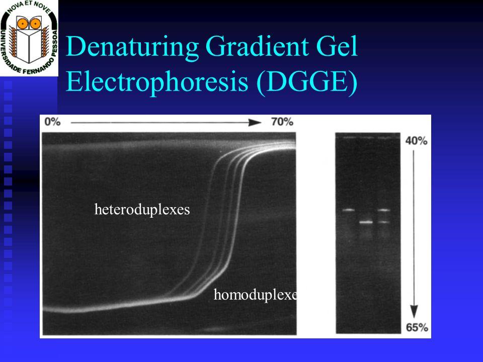 Denaturing Gradient Gel Electrophoresis (DGGE) heteroduplexes homoduplexes