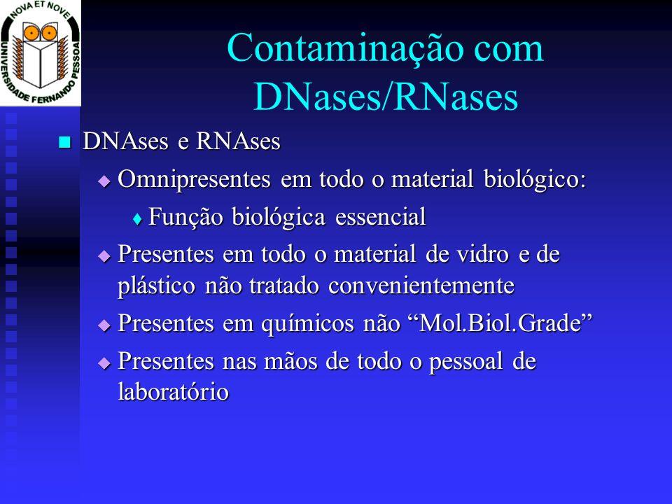 Contaminação com DNases/RNases DNAses e RNAses DNAses e RNAses Omnipresentes em todo o material biológico: Omnipresentes em todo o material biológico: