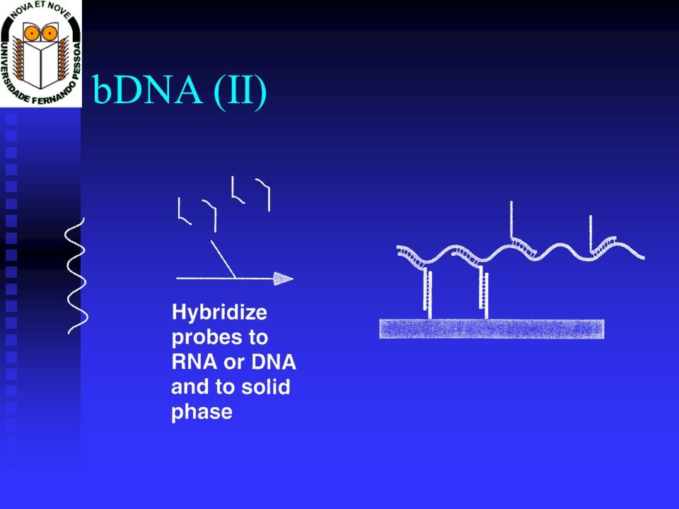bDNA (II)
