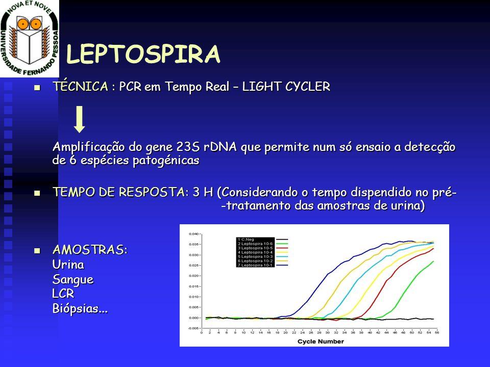 LEPTOSPIRA TÉCNICA : PCR em Tempo Real – LIGHT CYCLER TÉCNICA : PCR em Tempo Real – LIGHT CYCLER Amplificação do gene 23S rDNA que permite num só ensa