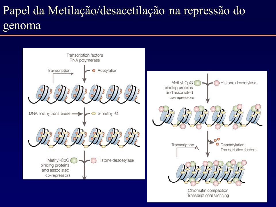 Papel da Metilação/desacetilação na repressão do genoma